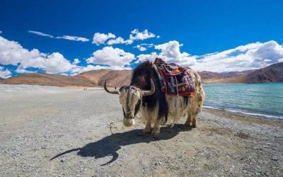 Discover The Culture and Landscapes Of India's Himalayas
