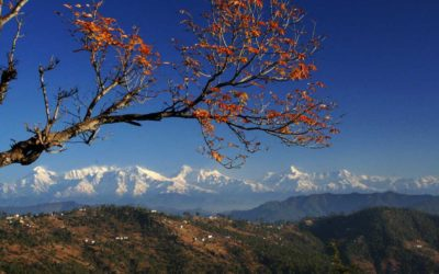 Binsar – the idyllic weekend getaway from Delhi