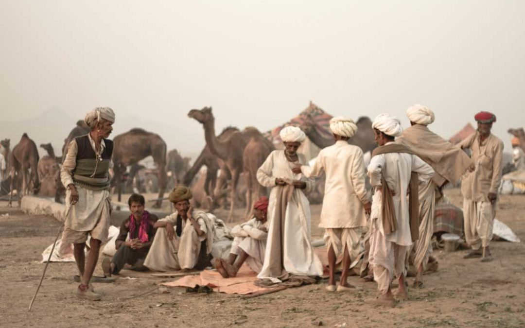 Diving deep into Nagaur Cattle Festival's antiquated air